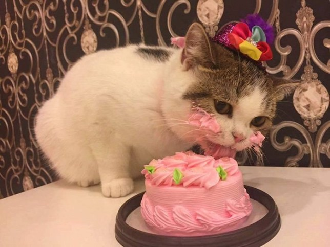 Excellent Cat Wearing Hat Eating A Birthday Cake Will Inspire You To Take Personalised Birthday Cards Veneteletsinfo