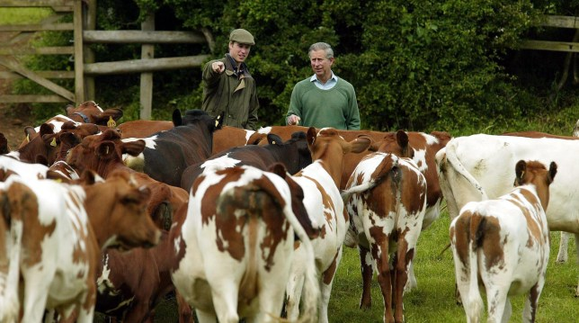 Prince William with his father, the Prince of Wales inspecting a Royal herd of Ayrshire dairy cattle during a visit to Duchy land in Gloucestershire.