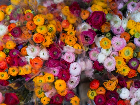 Chelsea Flower Show 2016: Opening times, how to get there and what to expect
