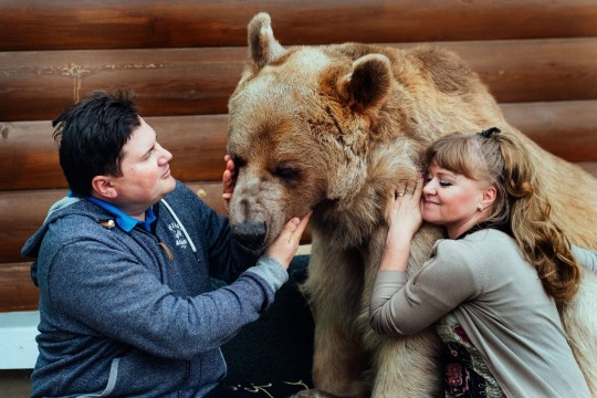 PIC BY OLGA BARANTSEVA/ CATERS NEWS - (PICTURED: Stepan the bear with Svetlana and Yuriy Panteleenko) - This family is un-bear-lievable! Meet the household that sits down to dinner with A BEAR at the table. While Svetlana and Yuriy Panteleenko, from Russia, might seem the ordinary couple, but for their 23-year-old bear named Stepan. At more than 7ft tall, Stepan is so domesticated that the family have been known to sit down in the evenings to watch the television together and he even steps in to help with household chores by watering the plants. While Stepan gets through more than a bowl of porridge a day he chows down on 25kg of fish, vegetables and eggs his favourite dish is a can of condensed milk thanks to a sweet tooth. SEE CATERS COPY.