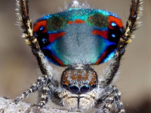 People think these spiders are really cute