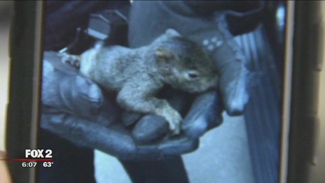 Man arrested with gun, marijuana and box of squirrels Credit: FOX 2