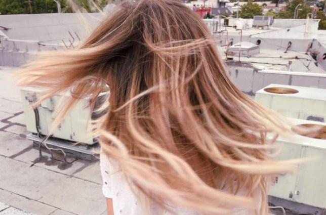 rose filter hair
