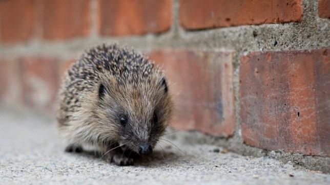 (Picture: Suffolk Wildlife Trust/Crowdfunder)