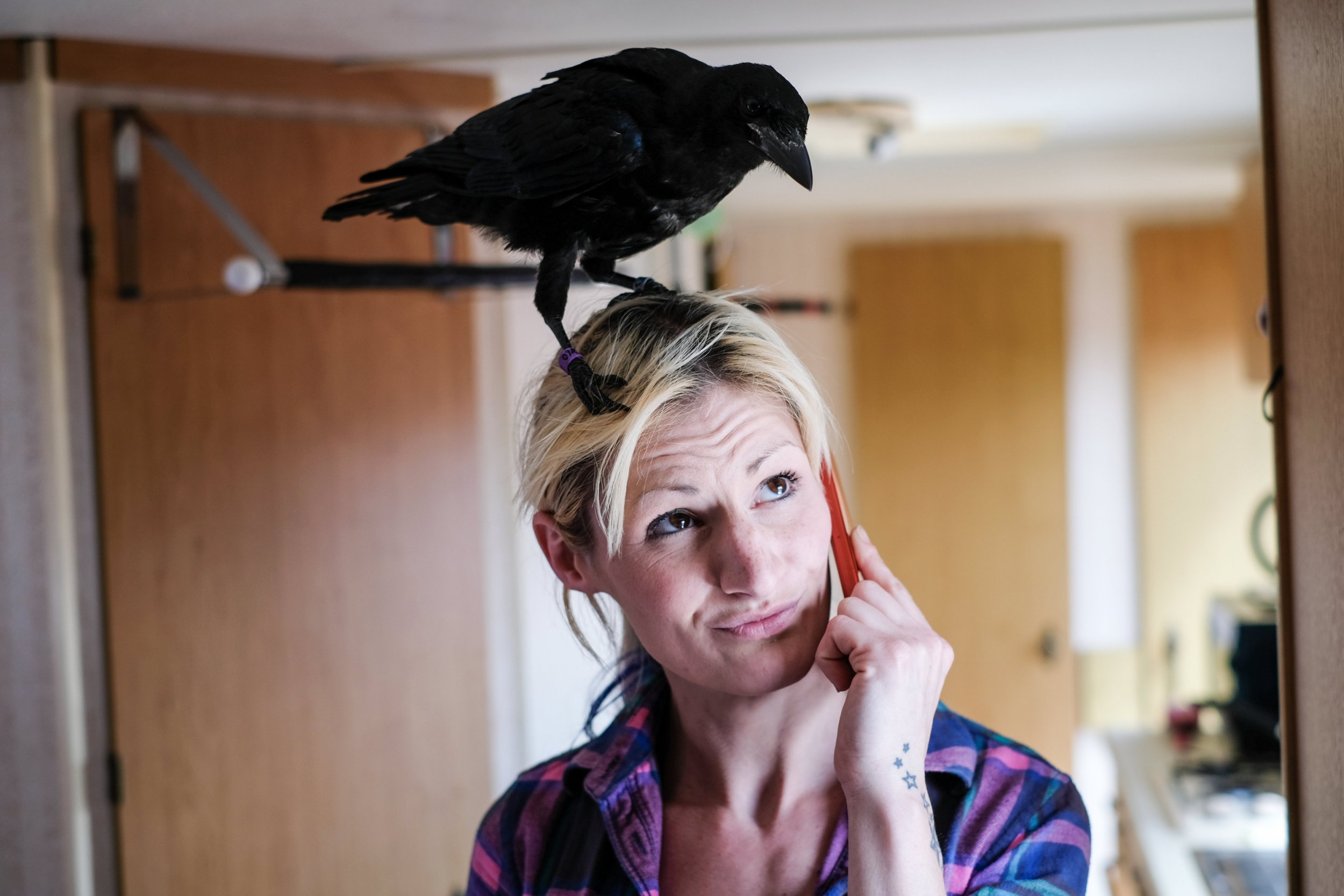 Vikkie Kenward with Fagin the crow who she took in after finding him abandoned on the floor 3 months ago. See SWNS story SWCROW; A woman who raised an orphaned baby crow says it won't leave her side three months on - and claims it watches TV with her, comes when called and is learning to TALK. Vikkie Kenward, 29, adopted the little bird in May after it fell out of its mother's nest and was left abandoned on a roadside. She called it Fagin - after the pickpocket in Oliver Twist - and hand-reared the new arrival, feeding it every 15 minutes and letting it nestle in the hood of her jumper. As Vikkie's new pet grew healthier, stronger and older, she expected it to spread its wings and fly away from her home, in Horsham, West Sussex.