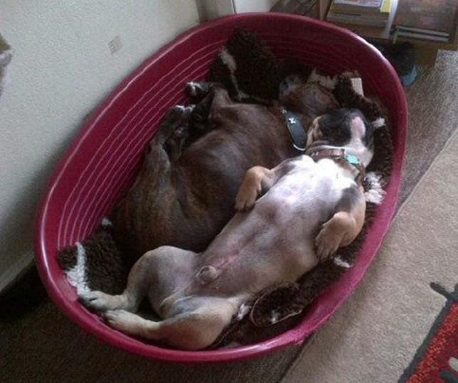 Student's Facebook warning as heatstroke killed her dog