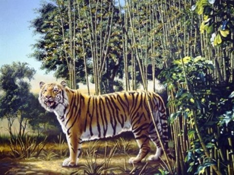 Can you find the hidden tiger in this painting?