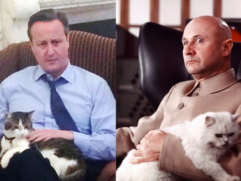 David Cameron tries to prove he loves cats but ends up looking like a Bond villain