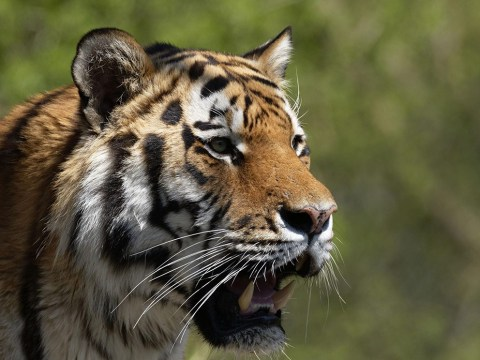 Woman mauled to death by tiger in Benidorm