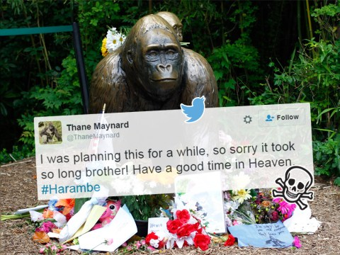 Cincinnati Zoo director's Twitter hacked by someone grieving Harambe