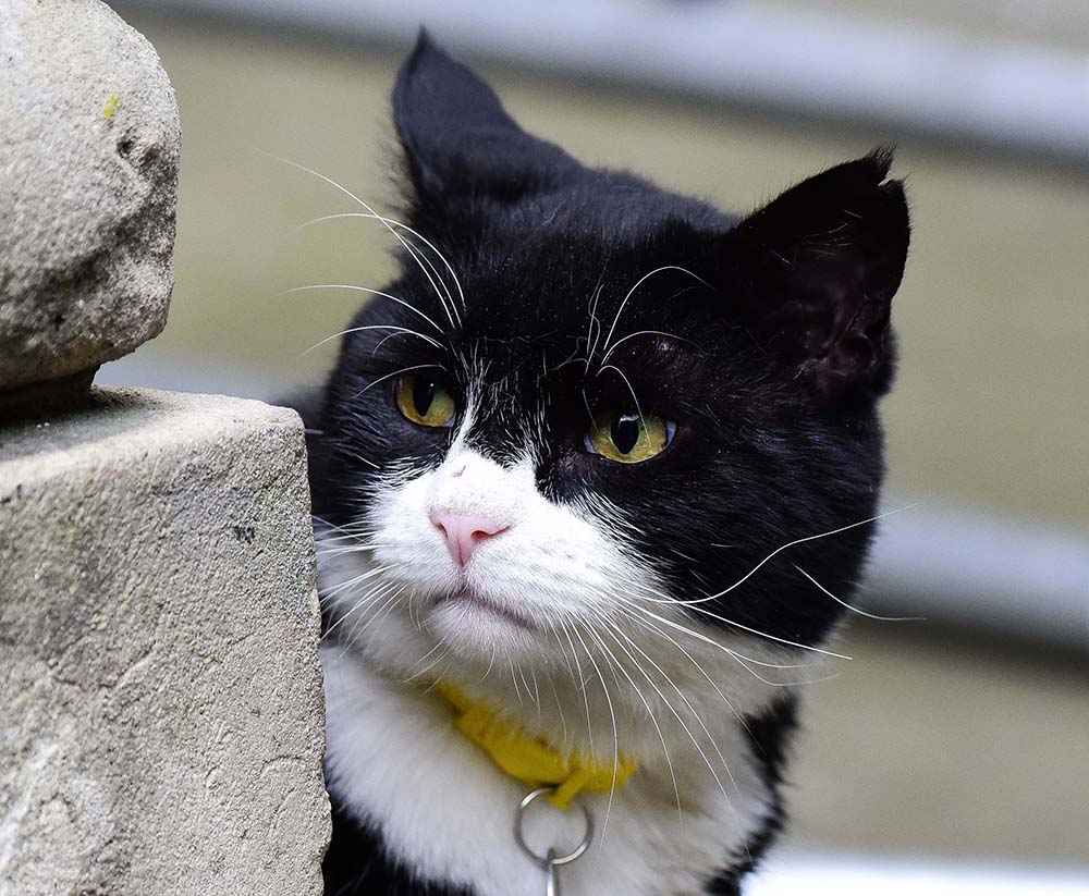 The cats from the foreign office and No.10 are at it again
