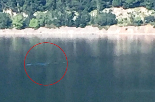tourist snaps lock ness monster