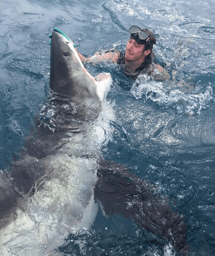 Incredible moment diver comes face-to-face with huge great white shark