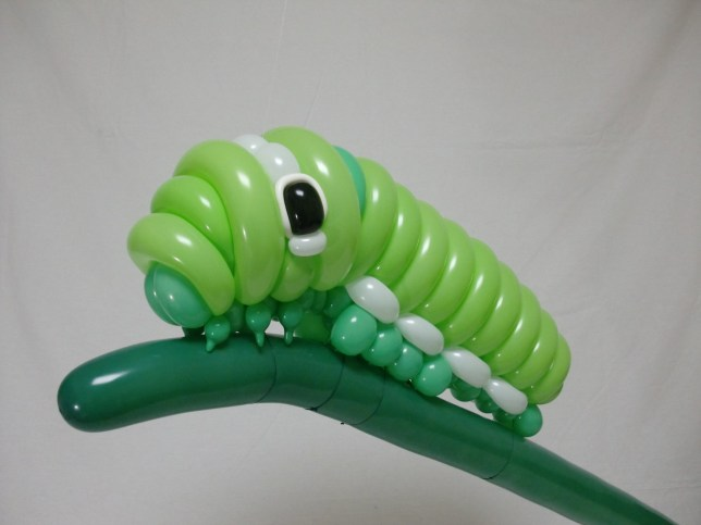 "A ballon caterpiller. These balloon animals by artist Masayoshi Matsumoto are so realistic their life-like appearances could be mistaken for the real thing. See Masons story MNART; The intricate designs of a lizard, buffalo, octopus and a parrot are among the balloon sculptures made by 26-year-old Masayoshi Matsumoto. Impressively the self-taught artist makes them from different coloured balloons without the use of any glue or seals which some balloon artists use to help build their projects. Masayoshi, a resident of the Chiba prefecture of Japan, said: ""I started making these seven years ago, I was really inspired by wildlife pictures and wanted to see if I could create realistic animals of my own."" His inflated craft blows run-of-the-mill balloon dogs you get a children's parties out of the water."