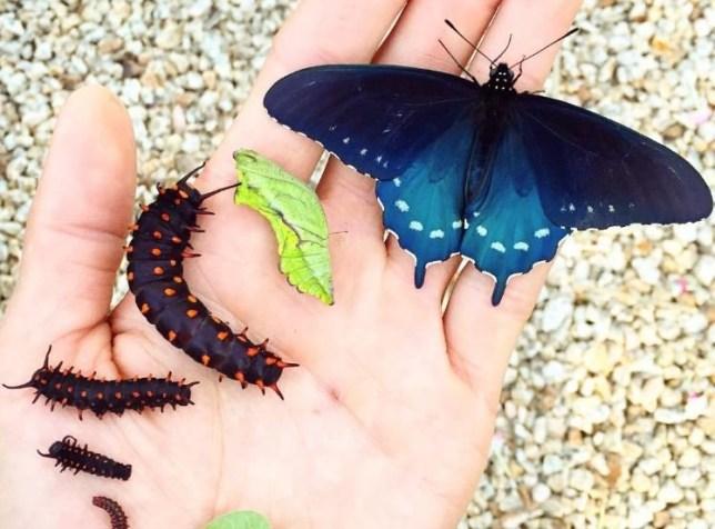 butterflies-changd.JPG