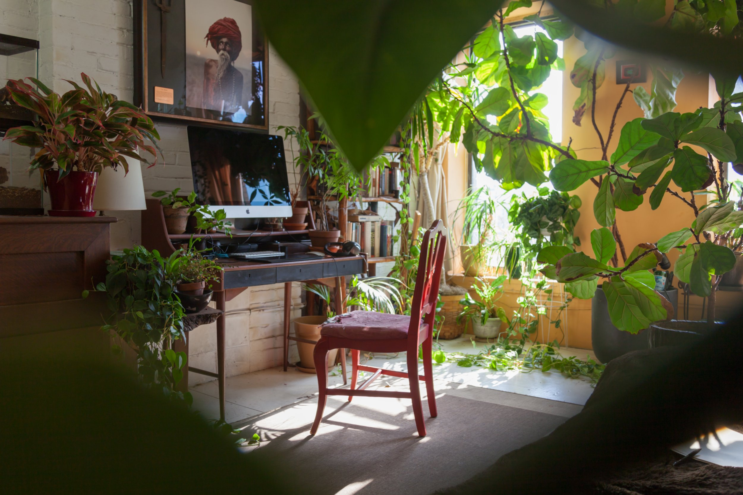 This woman transformed her flat into a mini jungle