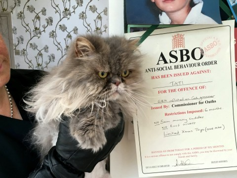 Cat behaviourist hands out ASBOs to misbehaving cats