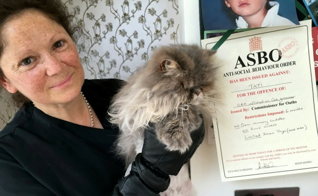 What Is An Asbo >> Cat Behaviourist Anita Kelsey Is Handing Out Asbos To