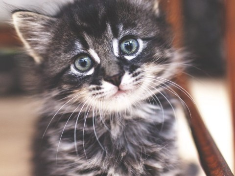 Obsessed with cats or dogs? You might have compassion fatigue