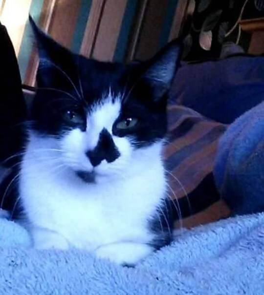 "Pippa A HORRIFYING video shows the moment a twisted yob put his pet cat's head in his mouth and bit down. Craig Mills is also seen beating the defenceless animal - which later died - in a clip secretly filmed by his partner. The disturbing footage helped land Mills, currently living in Lumphinnans, Fife, in court earlier this month where he was convicted of abusing and killing two-year-old Pippa. Mills' former partner, David Walker, has now released his footage in a bid to prove he had nothing to do with the horrendous cruelty inflicted on the animal. David, 29, is in hiding and living in fear after being verbally abused by locals who wrongly believe he was ""in on"" the attacks. David's video clearly shows Mills, 22, apparently unaware of the camera, gripping the cat and striking it hard on the body with his hand. The camera is moved and Mills can be seen again, still holding Pippa, and delivering several more blows. After the ninth blow, Mills can clearly be heard shouting at the cat: ""Who are you hissing at?"" He then forces the front half of the cat's head into his mouth and bites. The animal springs clear, appearing to leave Mills with a possible injury to his mouth."