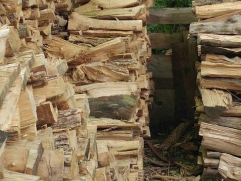 Can you spot the cat asleep in this pile of logs?