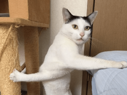 This awkward cat has just realised she's made a terrible mistake