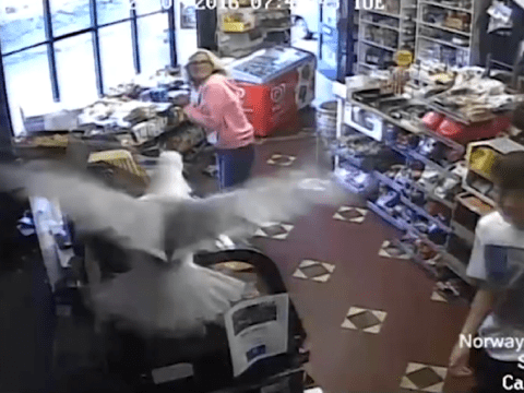This seagull casually strolled into a newsagents and caused chaos