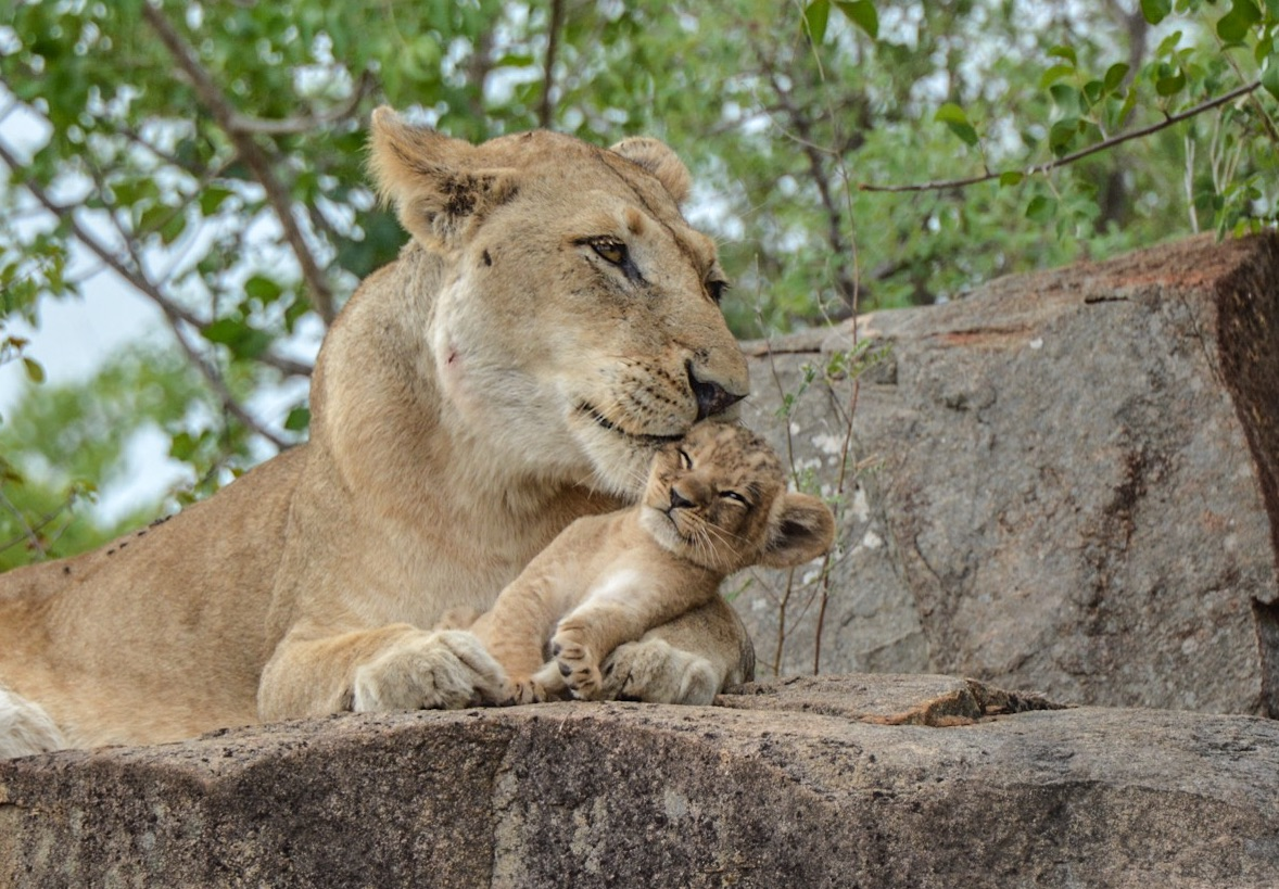 (Picture: Sabi Sabi Private Game Reserve)
