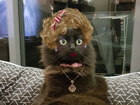 16 tweets that prove the true purpose of makeup apps is making pets super glam