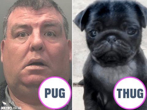 Father and son look like pugs they stole