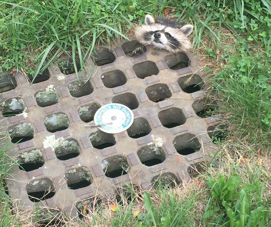 Having a bad day? Well, you could be this raccoon