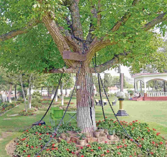 A drunk British army officer ordered the arrest of this tree in Pakistan in 1898 and it's still in chains Credit: Facebook