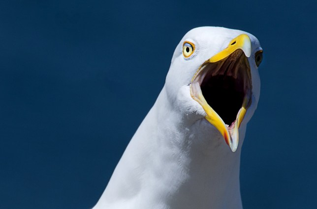 Flock of seagulls hold woman hostage for three days | Metro News