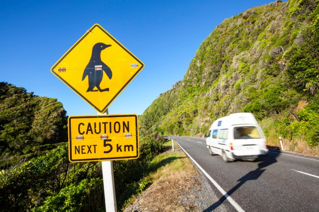 Penguin warning sign & coastal road, Punakaiki, West Coast, South Island, New Zealand