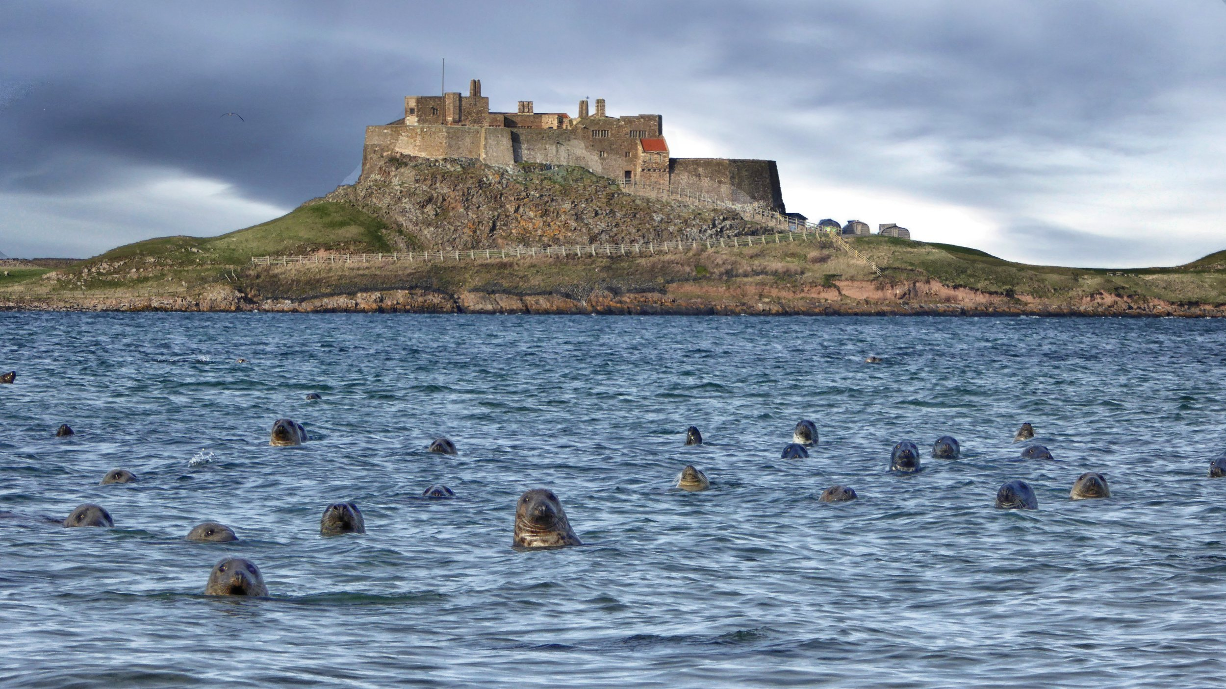 Seals photobomb man's picture – how many can you see?