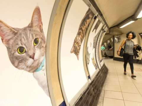 Every advert in a London Underground station has been replaced with cat photos