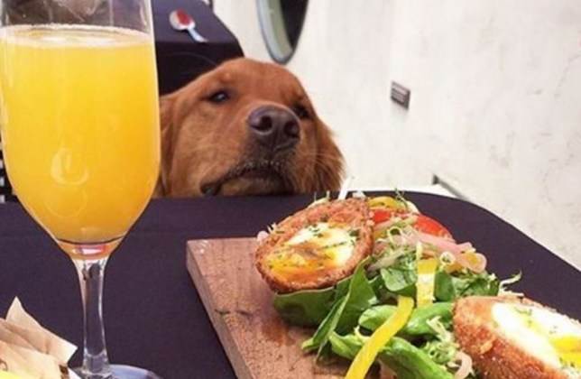 dogs who brunch