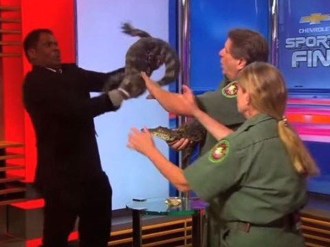 WATCH: Presenter gets freaked out by alligator live on TV