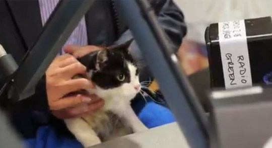 noel-edmonds-cat-counselling