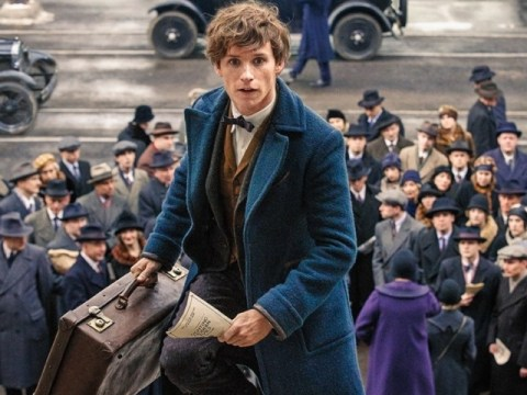 Fantastic Beasts and Where to Find Them trailer's Harry Potter overlap tease causes fans to go into meltdown