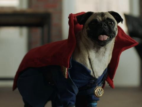 WATCH: Doctor Strange's Benedict Cumberbatch announces the new Avengers line up – with puppies