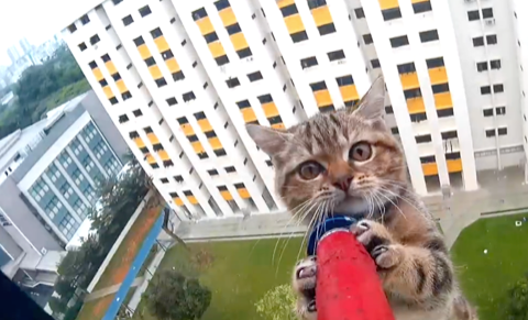 A scaredy-cat is rescued from a ledge twelve floors high