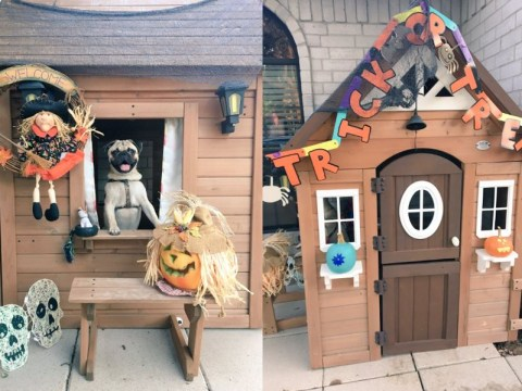 This girl gave her puppy's house a makeover for his very first Halloween