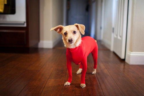 You can now get leotards for dogs so they can channel their inner Olivia Newton-John
