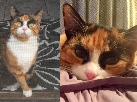 This cat is the Cara Delevingne of the feline world