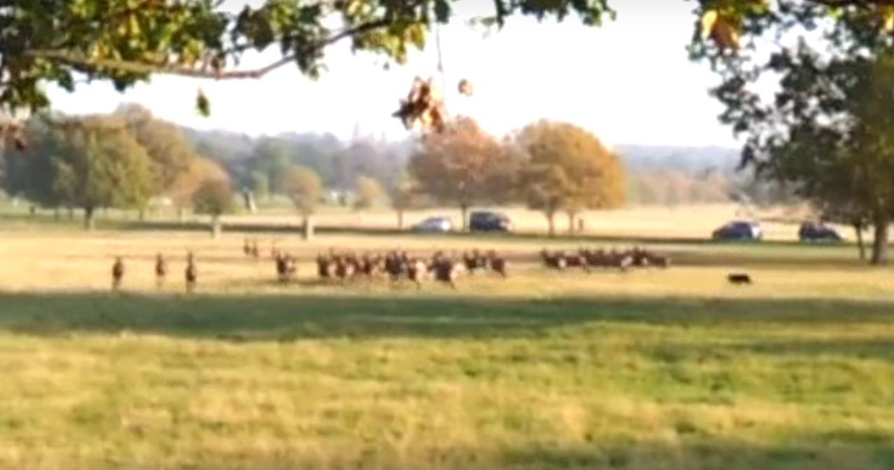 Jesus Christ Fenton Six Years Since He Chased Deer In Richmond
