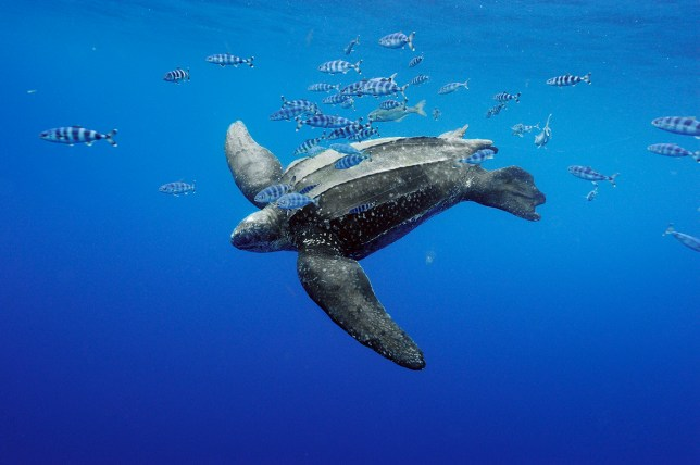 A lovely turtle