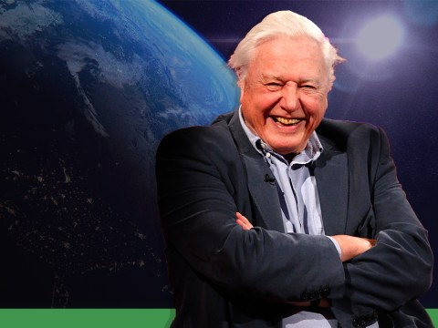 David Attenborough teases dramatic second series of much-loved wildlife documentary Planet Earth II