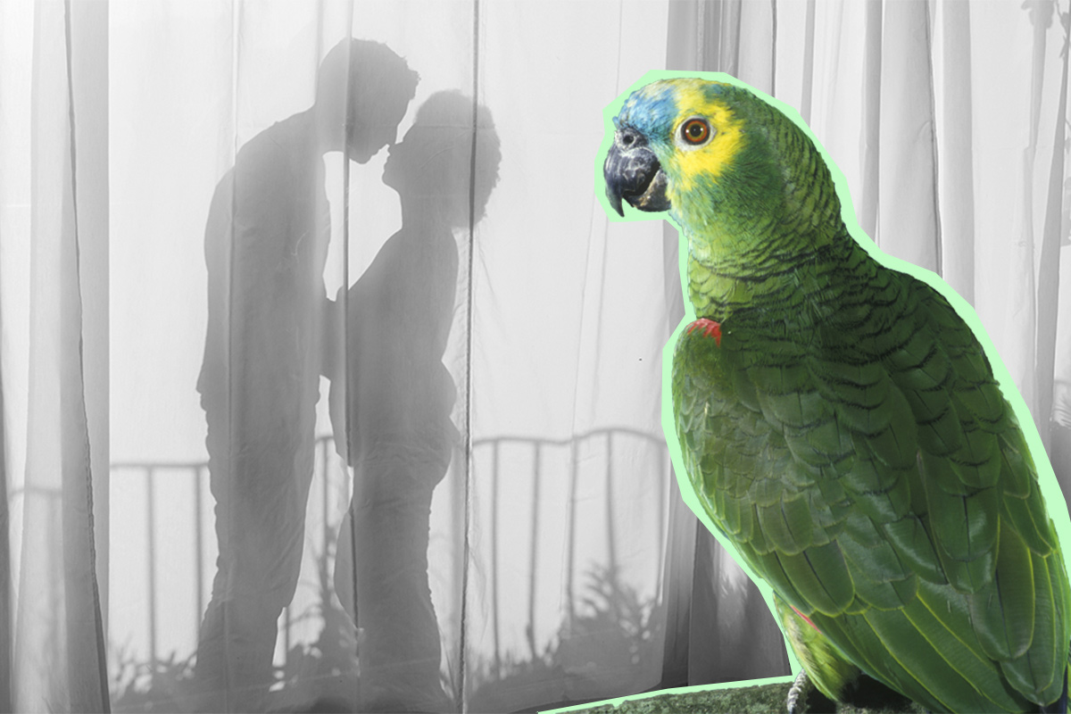 Parrot reveals husband's affair with housemaid