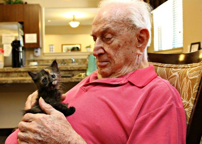 Animal shelter teams up with assisted living facility to rescue kittens